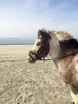 Auch Pferde machen mal einen Strandurlaub, unsere zumindest!