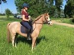 Junges Pony mit viel Potential